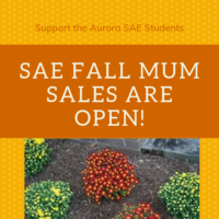SAE Fall Mum Sales Open